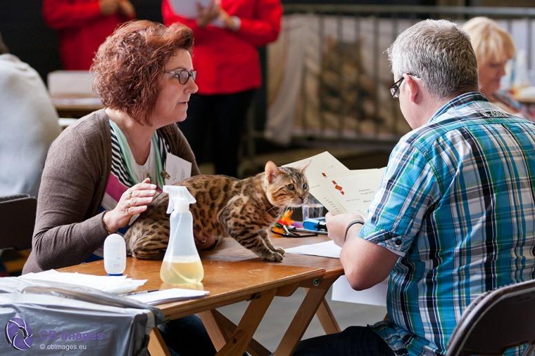 Internationale Kattententoonstelling in Ahoy Rotterdam